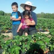 know your farmer - Westmoreland Farms
