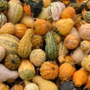 fall superfoods health benefits