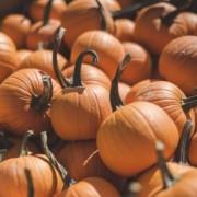organic sustainable local food