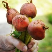 seasonal eating fall foods healthy eating