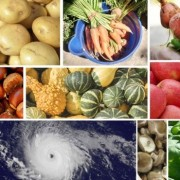 eating local - hurricanes