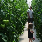 sustainable greenhouse online farmers market