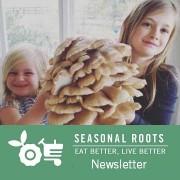 Magnolia Farm mushroom health benefits