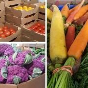 local organic food