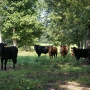 veteran-owned grassfed farm Cattle Run Farm