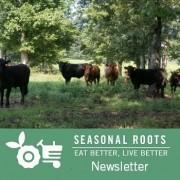 Cattle Run Farm veteran-owned grassfed farm