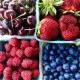 healthy breakfast foods local berries