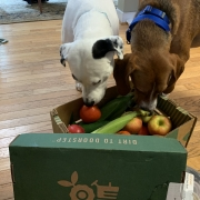 dogs on seasonal roots delivery day